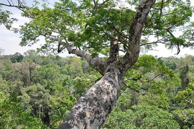 Blick von einem riesigen Baum im Regenwald