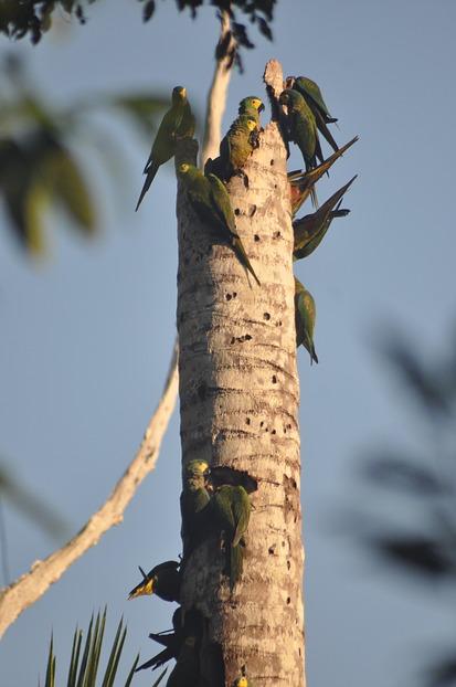 Viele Papageie auf einem Baumstumpf