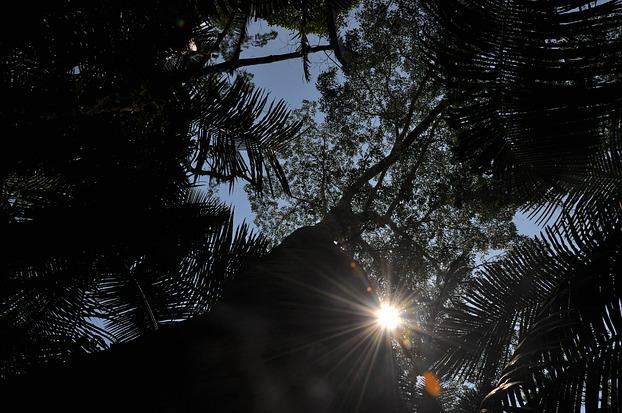 Blick in die Baumkronen