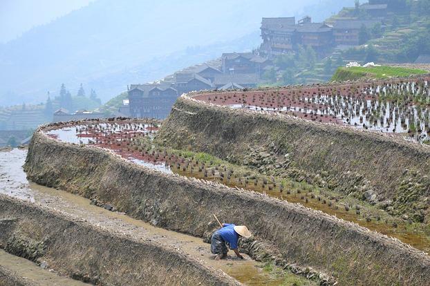 Die Feldarbeit ist hart (Bild: MaSan)
