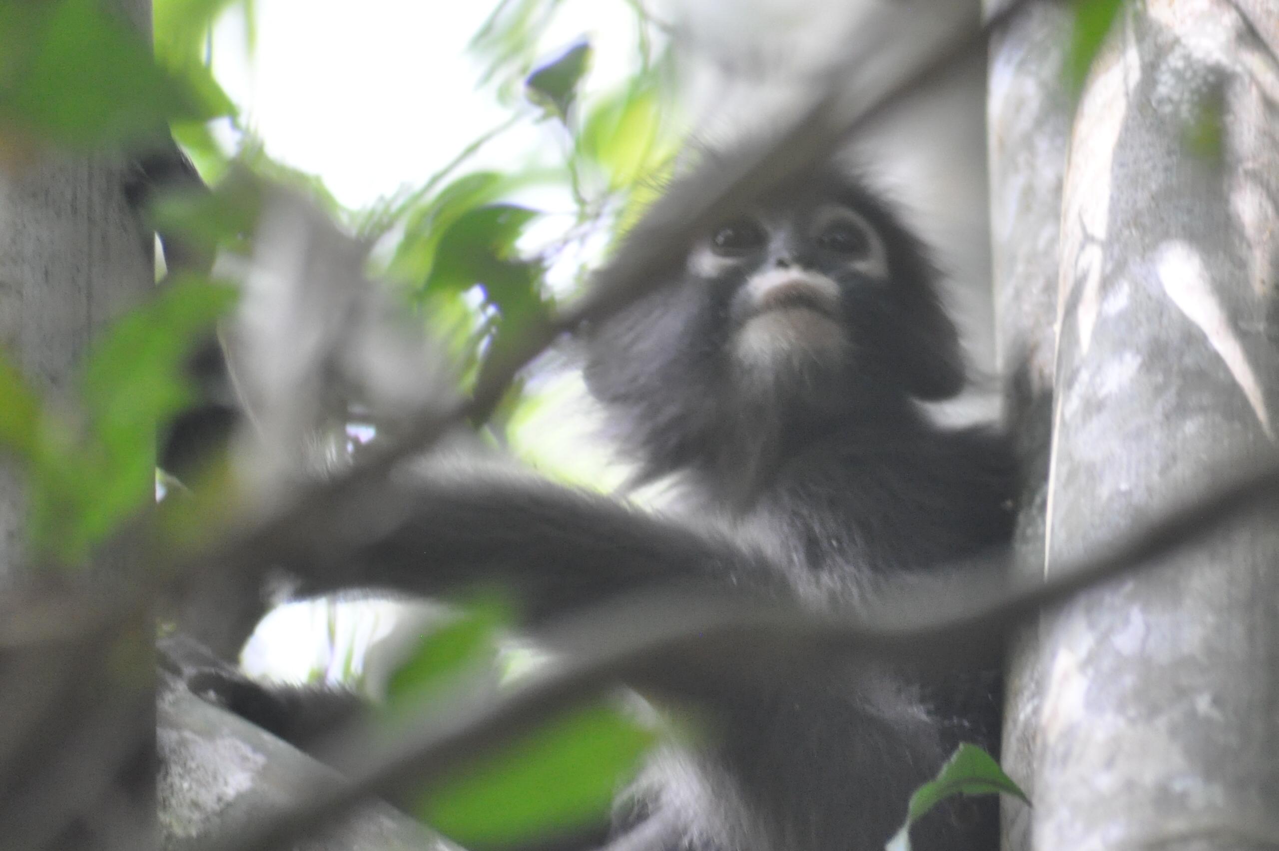 Der Khao Sok Nationalpark gehört zu den ältesten Regenwäldern der Erde, Bild: MaSan (Martin Seibel)