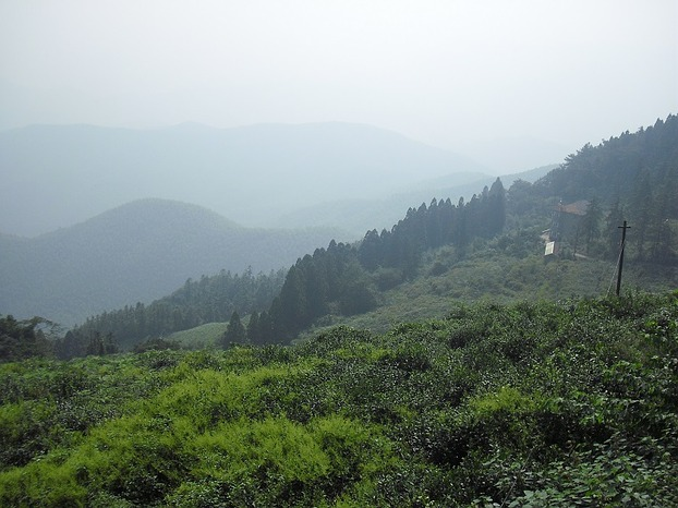 View obver tea fields (image: MaSan / Martin Seibel)