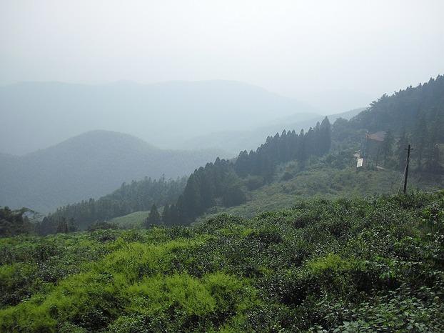View obver tea fields (image: MaSan / Martin Seibel)