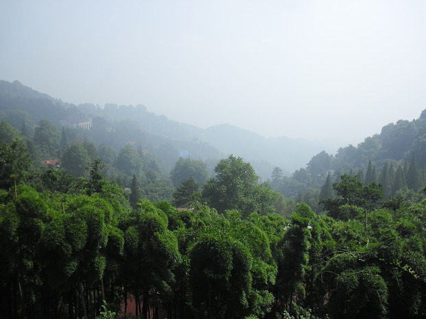 View over bamboo forests high on Moganshan (Image: Masan / Martin Seibel)