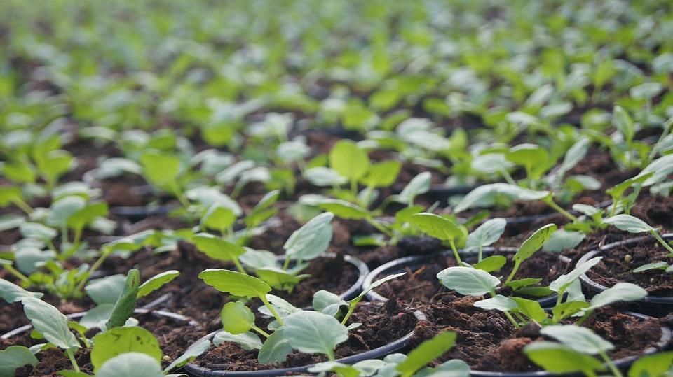plant-1120830_960_720