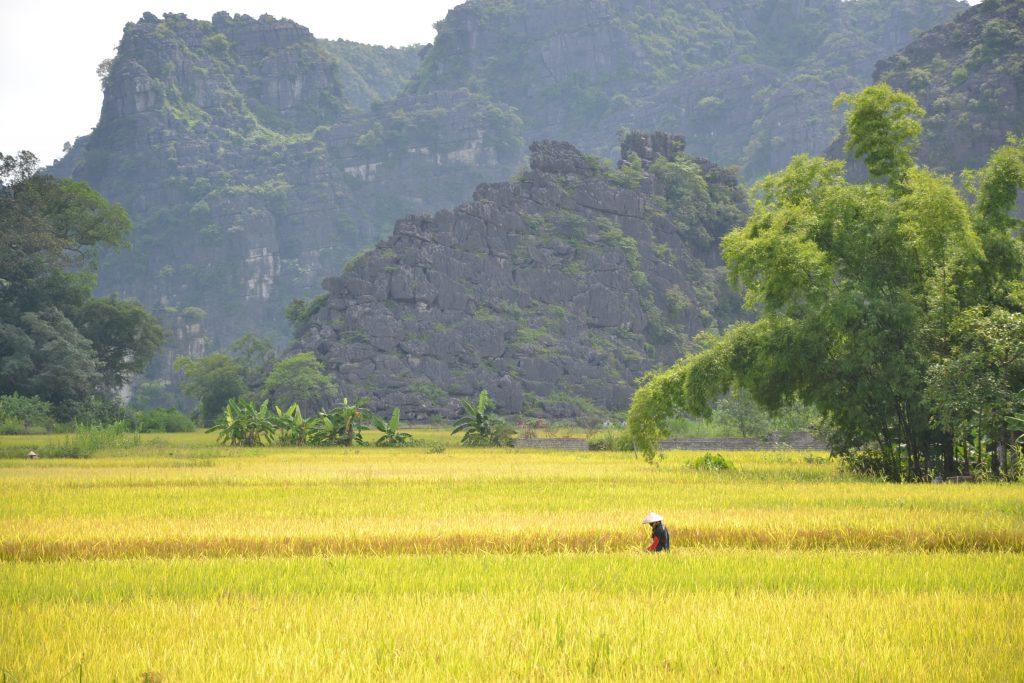 Landschaft in Nin Binh, Vietnam