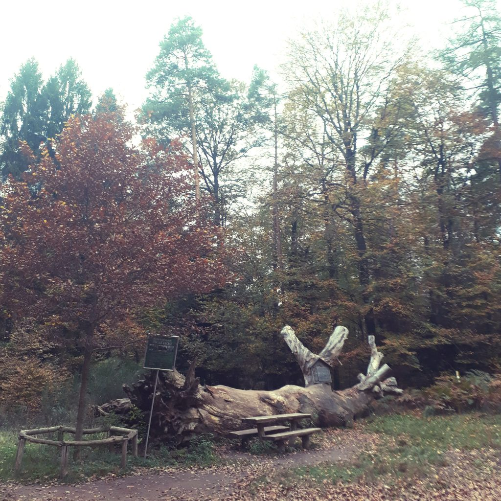 Mit dem Mountainbike unterwegs in Hauenstein in der Pfalz